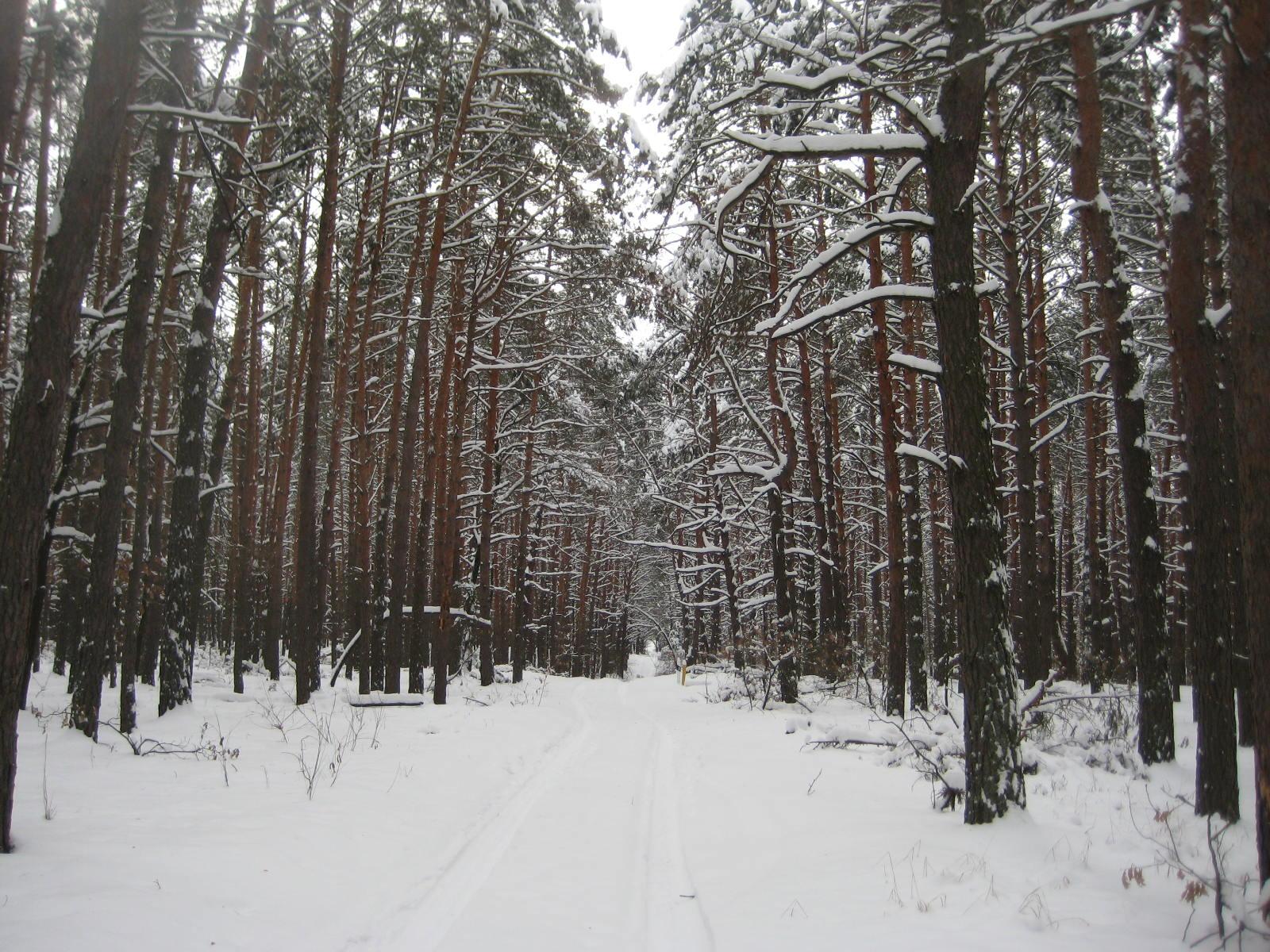 сказочный лес зимой