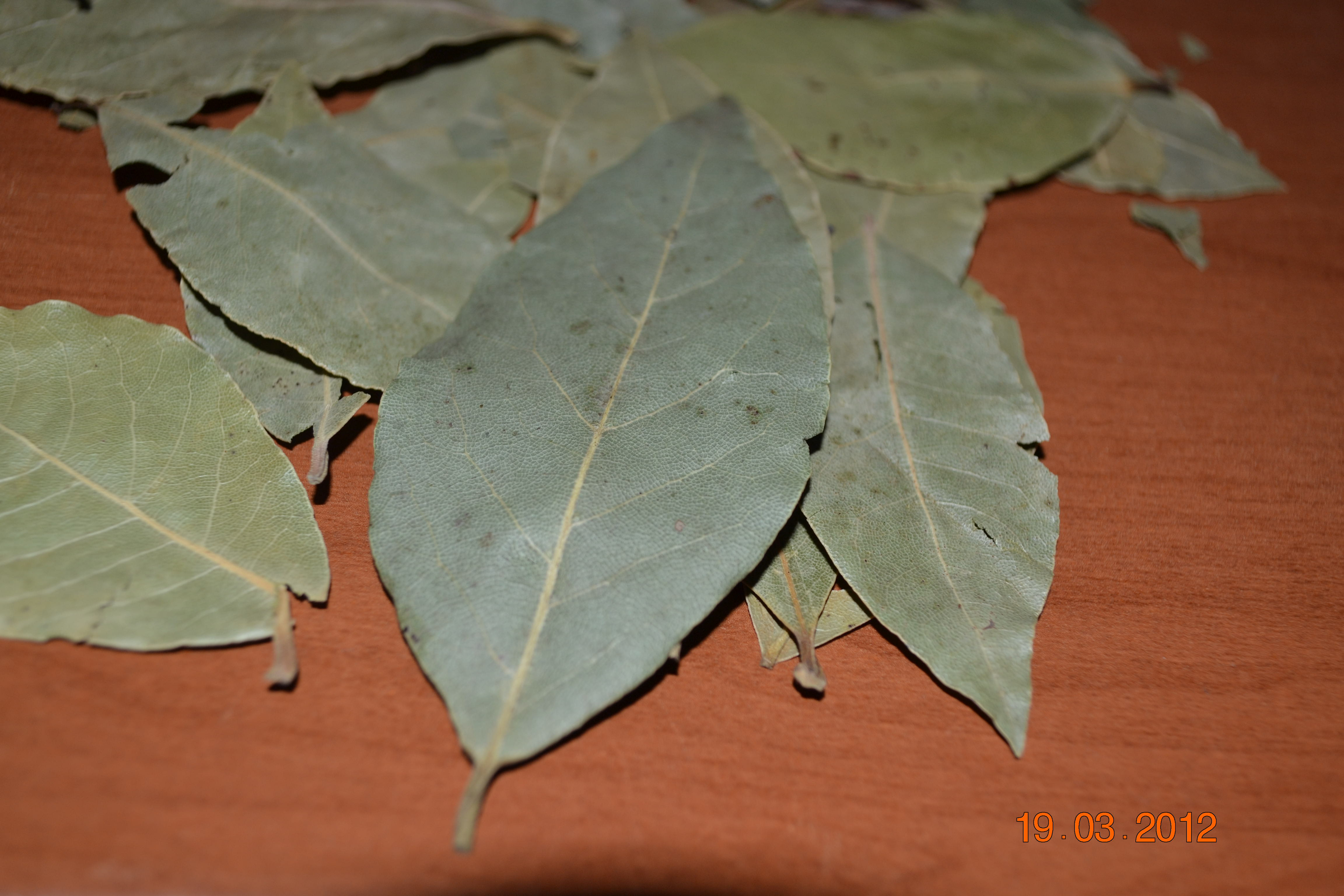 Лавровы лист в домашних условиях из семян