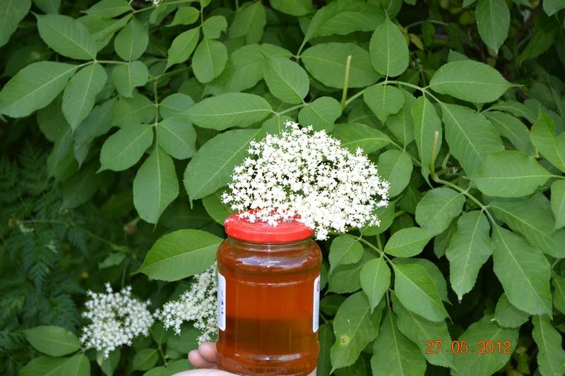 Как сделать мед из бузины
