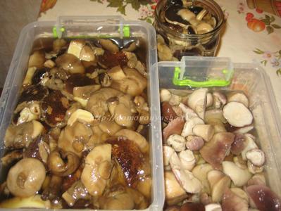 Как можно приготовить грибы