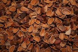 Кедровые орешки полезные свойства.