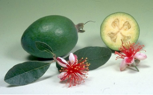 Фейхоа фрукт, полезные свойства.
