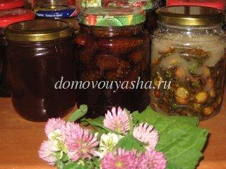 Мед из молодых сосновых шишек