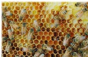 пчелиный воск