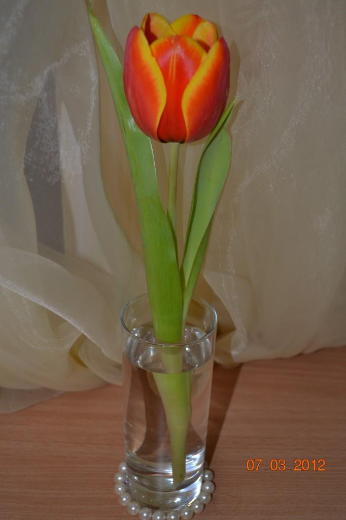 цветы к празднику