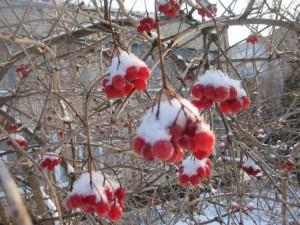 Как лечиться от простуды