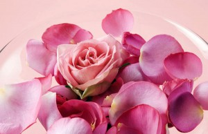 Приготовление розовой воды.