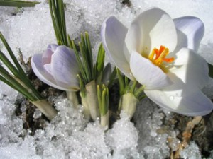 Опять пришла весна.