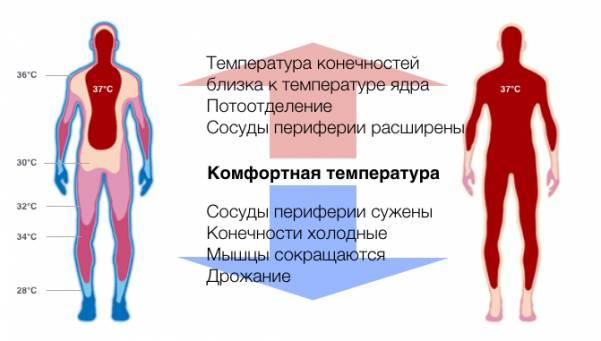 Физиологические механизмы закаливания