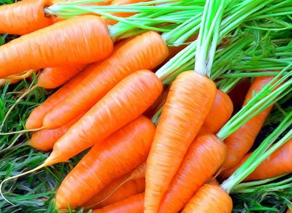Полезные витамины и лечебные свойства моркови