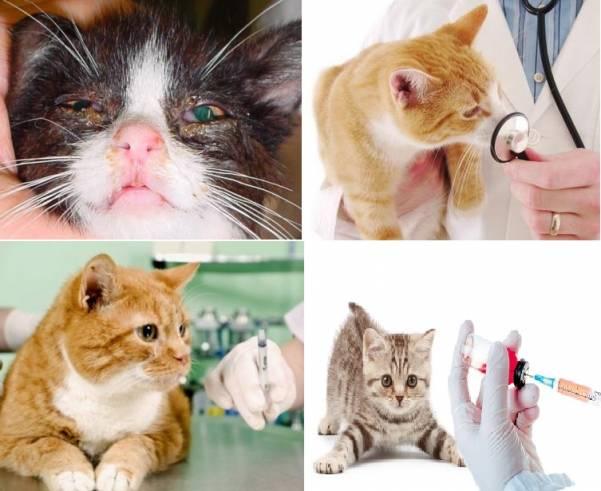 Токсоплазмоз симптомы у кошек