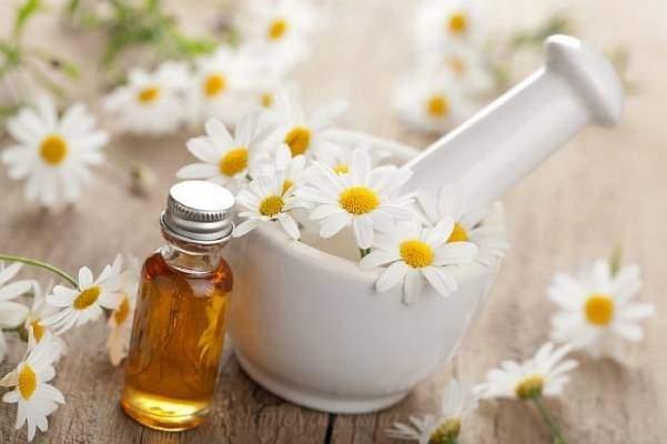 Ромашка аптечная полезные свойства и применение