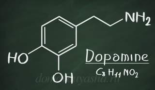 Дофамин как повысить уровень в организме