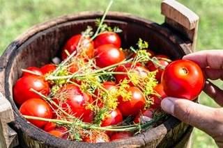 Малосольные помидоры вкусные рецепты
