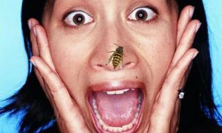 Укусила оса или пчела что делать