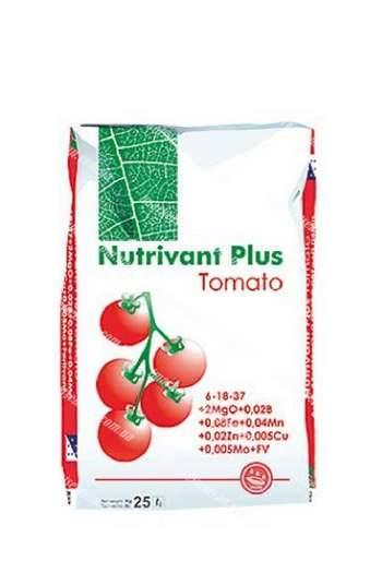 Вершинная гниль на помидорах лечение народными средствами