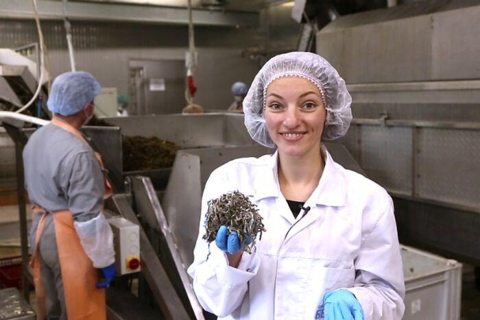 Чем полезна морская капуста