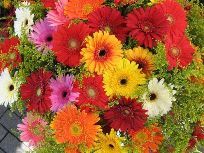 Какие цветы долго стоят в вазе и не вянут