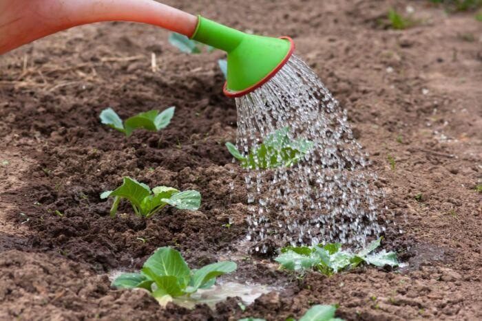 Как применять нашатырный спирт для подкормки растений