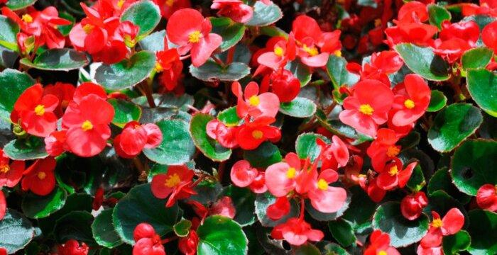 Какие цветы сеять на рассаду в январе