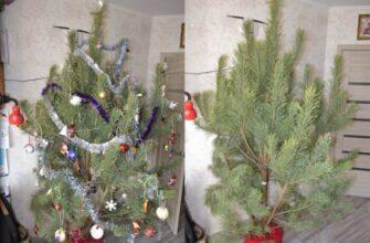 Как вынести елку из квартиры без мусора