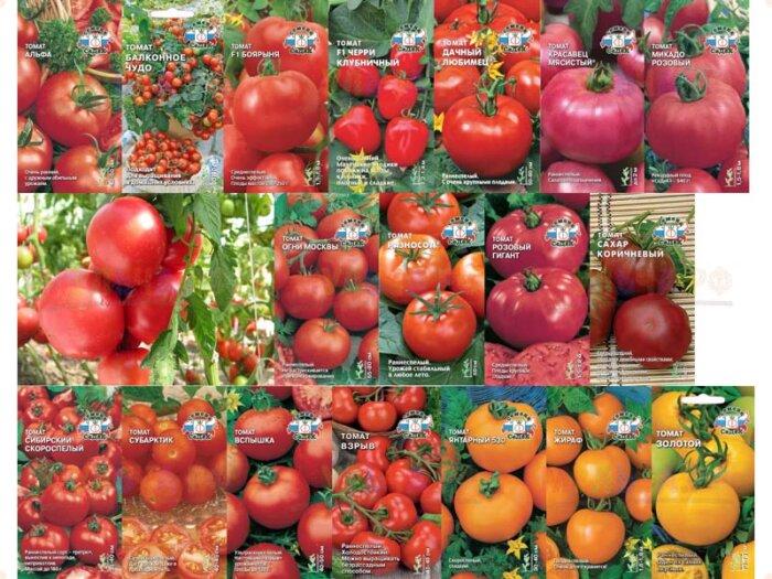 Как вырастить рассаду помидор в домашних условиях
