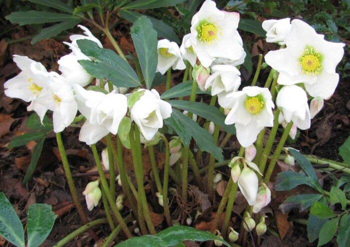 Какое растение цветет в мае