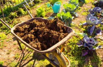 Органические удобрения - их виды и характеристика