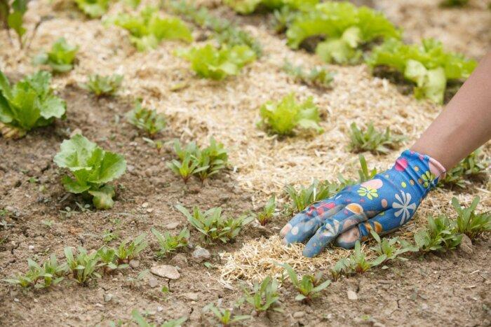 Как бороться с сорняками на огороде