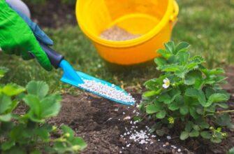 Удобрение для клубники весной для увеличения урожая